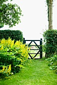 Garden gate between hedges and bed of yellow flowers