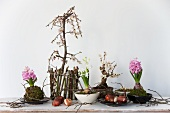 Small plum tree, bonsai plum tree (Prunus), flower bulbs and hyacinth