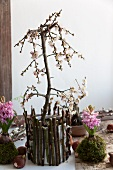 Small plum tree and hyacinths