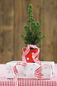 Small potted Christmas tree on top of gift box