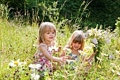 Two blond girls picking flowers in a summer meadow