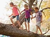 Children balancing on a tree trunk