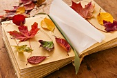 Autumn leaves on book, studio shot