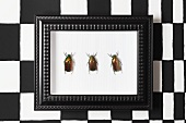 Beetles in picture frame on black and white patterned wall