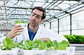 Germany, Bavaria, Munich, Scientist in greenhouse examining corn salad plants