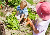 Germany, Bavaria, Boy and girl picking vegetables in garden