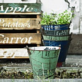 Decorative buckets and wooden crates in garden