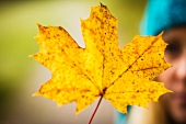 Woman holding yellow autumn leaf