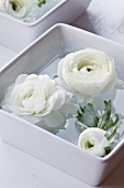 White ranunculus flowers floating in water in white china dish
