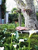 Thick tree trunk encircled by bench in densely planted garden; corner of house with climbing plants in background