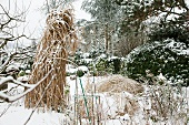 Snowy garden; snow-covered ornamental grass in foreground