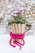 Cyclamen in pot made of small pieces of wood and felt ribbon in snow