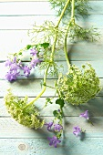 Dill flowers and campanulas