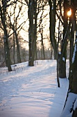 Snowy woodland path