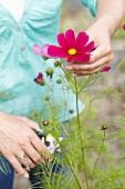 Frau schneidet Schmuckkörbchen im Garten
