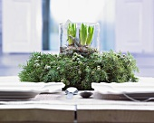 Wintery table centrepiece of jar of hyacinths in wreath of juniper