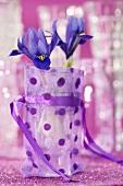 Iris reticulata in water glass in gift bag