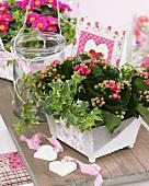 Spring arrangement of pink Kalanchoe in planter