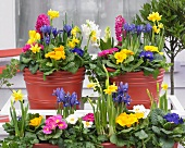 Bright spring flowers in planters on terrace