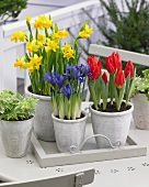 Various spring flowers in pots on terrace table