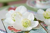 White hellebore flowers on nostalgic postcard
