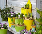 Spring atmosphere with sprouting bulbs in yellow and green planters