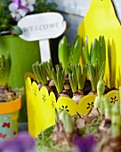 Hyacinths and 'Welcome' sign in yellow planter