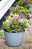 Planters of autumn plants