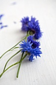 Freshly picked cornflowers on white wooden surface