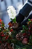 Weihnachtsgesteck aus Tannenzweigen, Scheinbeeren, Lorbeer, Äpfeln, Hyazinthe und Pinienzapfen gestalten