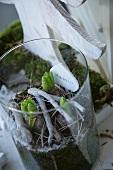 Hyacinths and festive window decoration