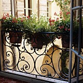 Potted plants on wrought iron balcony balustrade