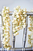 Jasmine Flowers with Buds Closed Hung Over a Railing