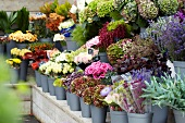 Many different types of potted plants and cut flowers