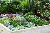 Verschiedene Zimmerpflanzen in der Gärtnerei