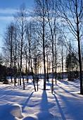 Winter landscape on sunny day