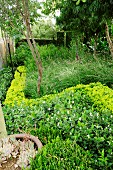 Densely-planted garden bed with various foliage plants arranged in parallel curves