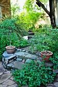 Garden steps with crazy paving in summery garden