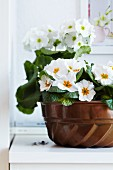 Bundt tin used as planter for white primulas