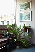 Corner of balcony decorated with pictures & potted plants