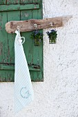 Jars of forget-me-nots and tea towel hanging from hooks on piece of driftwood in front of old window shutter