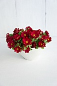 Bowl filled with red asters