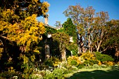 Shrubs and trees in autumn colours in front of climber-covered house