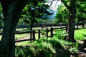 View across wooden gate of horse in paddock in forested, hilly landscape