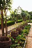 Aus Weinreben geflochtene Körbe in langgestrecktem Beet zwischen Gartenwegen; im Hintergrund rosenberankte Pergola mit zeltförmigem Dach