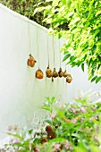 Cords held tight by stone weights over garden wall as supports for climbing tomato plants