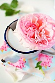 Pink rose in an enamel cup