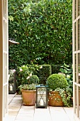 View through open French door of a terrace with terra cotta plant pots in front of a tall hedge