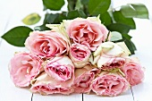 Bouquet of pink roses on white painted wood boards
