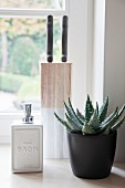 Plant in black pot next to soap dispenser and knife block in front of window